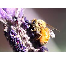 Bee Up Close Photographic Print