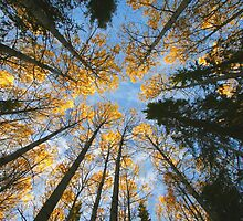 Colorful trees and sky by Ingvar Bjork Photography