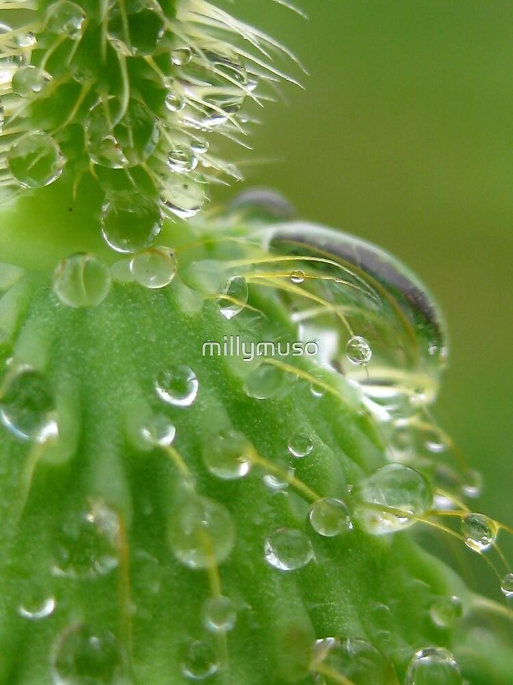 poppy bud by millymuso