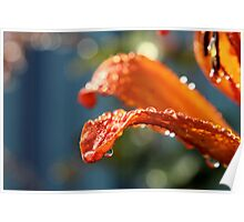 Waterdrops on a Lilly Poster