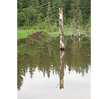 Reflections of a Beaver Pond Photographic Print
