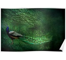 Peacock Wood Poster