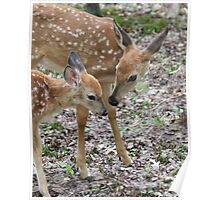 Friendly Fawns Poster