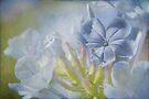 misty blue by Teresa Pople
