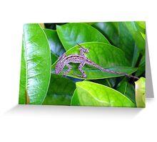 Juvenile Cuban Anole Lizard - Florida Greeting Card