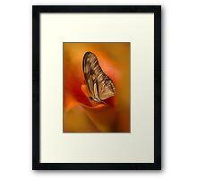 Brown Butterfly on Calia flower Framed Print