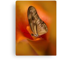 Brown Butterfly on Calia flower Canvas Print