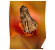 Brown Butterfly on Calia flower Poster