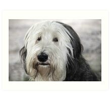 Shaggy Dog Art Print