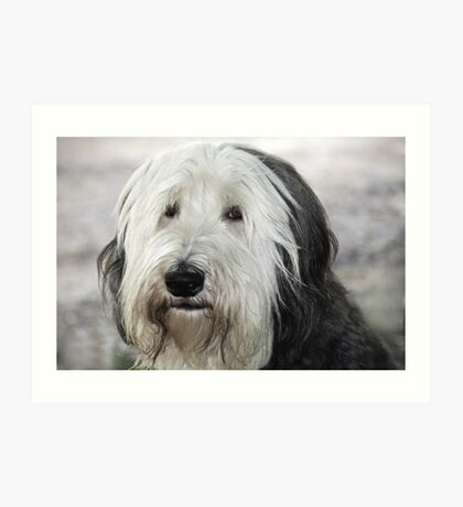 Shaggy Dog Art Print