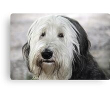 Shaggy Dog Canvas Print