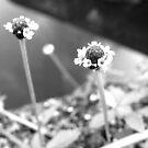 Miniscule Flowers - Lakes Edge by Glenn Cecero