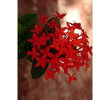 flower - flor Photographic Print