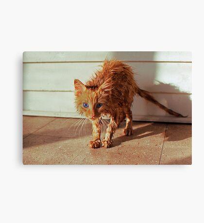 Wet Kitty Canvas Print