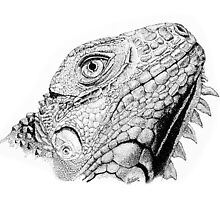 Iguana in Pen and Ink by SMDorsey