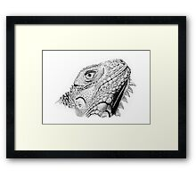 Iguana in Pen and Ink Framed Print