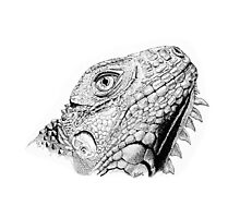 Iguana in Pen and Ink Photographic Print
