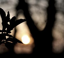 Morning Light by cameraimagery