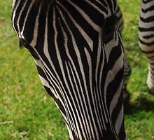 Stripes by Jessica Perry