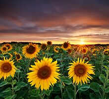 Here comes the Summer by Michael Breitung