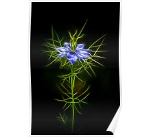 Love In A Mist Fractilous Style Poster