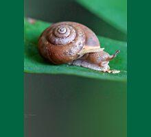 Woodland Snail on Sassafras Leaf Unisex T-Shirt