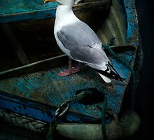Old weathered wooden boat . . . .  with Gull by moor2sea