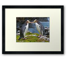 Yellow-eyed Penguins Framed Print