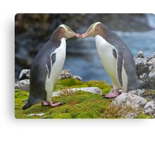Yellow-eyed Penguins Metal Print