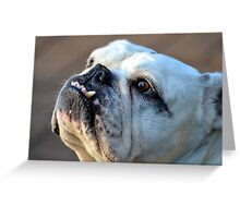 I'm Really NOT as Mean as I Look...! Greeting Card