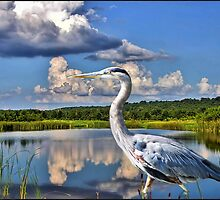 Heron in the Water by ╰⊰✿ℒᵒᶹᵉ Bonita✿⊱╮ Lalonde✿⊱╮