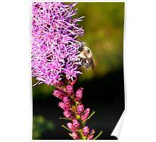 Barney da Bee Poster
