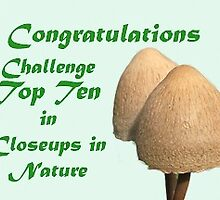 Closeup in  Nature- Top Ten Banner by DPalmer