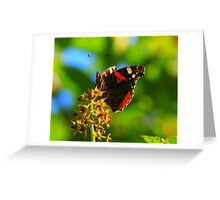 Red Admiral Butterfly, Nunnery Lane, Darlington.England Greeting Card