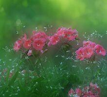 Poking Through the Haze by enchantedImages