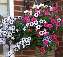 Pretty Hanging Basket by BlueMoonRose