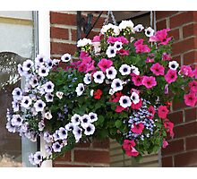 Pretty Hanging Basket Photographic Print
