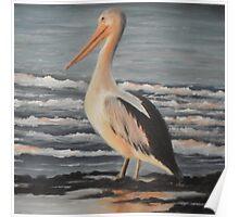 Pelican Wading  Poster