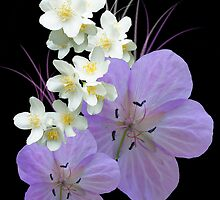 Pink and white flowers by orko