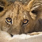 Lion cub feeding by Neville Jones