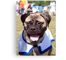 Bull Mastiff Canvas Print