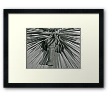 Spike.... Framed Print
