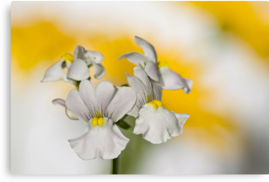 Yellow Kisses by garts