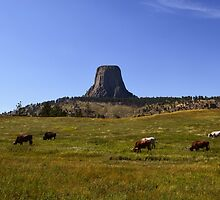 Devils Tower, Crook County, Wyoming, USA by Mike Kunes