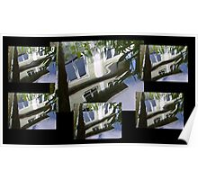 distorting fishpond reflections Poster