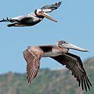 Pelican Pair by gfydad
