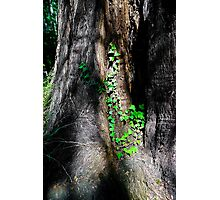 Tilden Park, Berkeley California Photographic Print