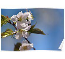 Mono no aware I - Cherry Tree at Lenoir Poster