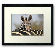 Plains Zebra Portrait, Akagera National Park, Rwanda, by Carole-Anne Fooks Framed Print