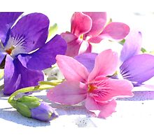 Sweet Violets Photographic Print
